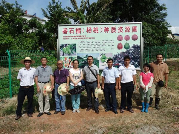 广西热作所4个种质资源保护项目顺利通过农业部南亚