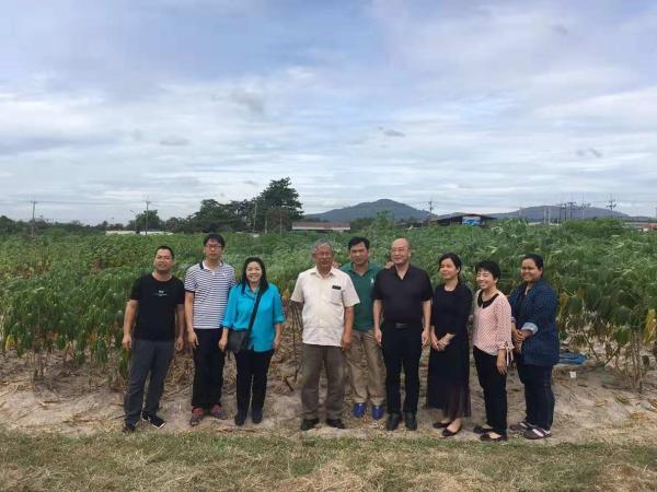 参观泰国罗勇大田作物中心木薯试验基地