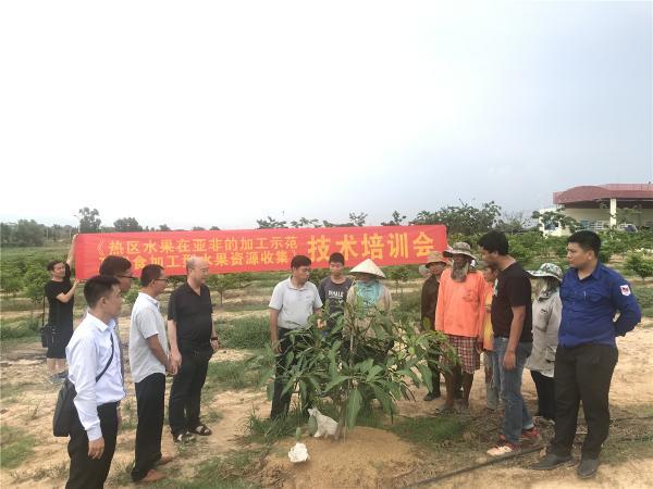 芒果栽培技术培训