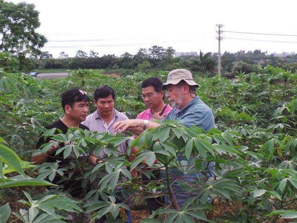 """CIAT木薯育种专家参观""""广西木薯良种中心""""的""""开花调控""""育种基地"""