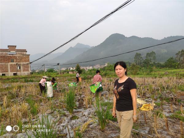 指导清理和消毒黑木耳种植场地