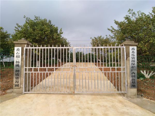杨桃资源圃