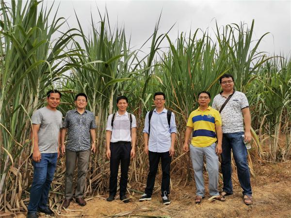 参观甘蔗种质圃