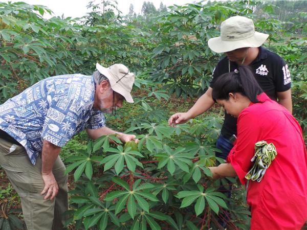 CIAT专家来访学习木薯开花调控技术