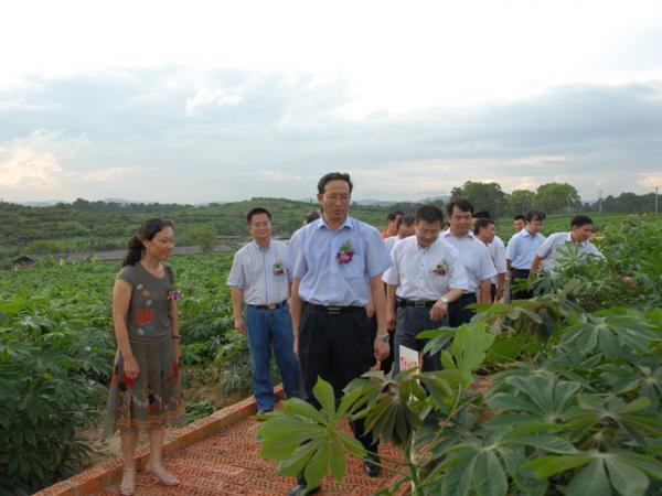 广西自治区副主席陈章良、科技厅厅长陈大克等领导视察我所木薯试验基地