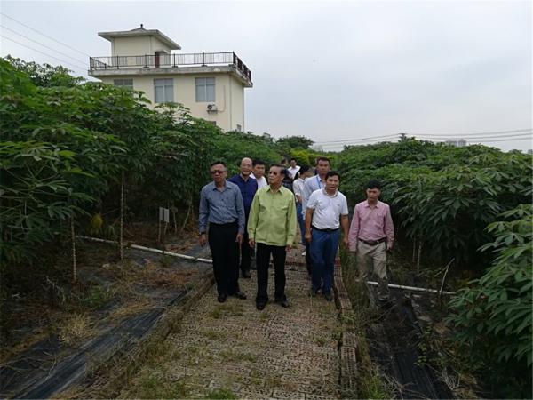 老挝前副总理宋沙瓦·凌萨瓦参观国家科技部木薯国际科技合作基地