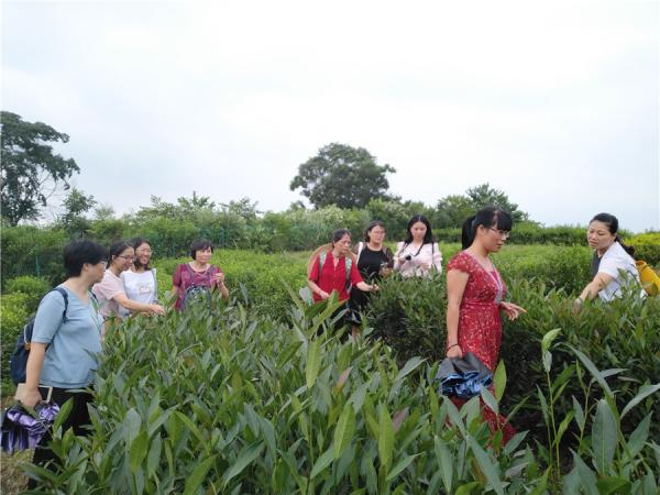 探讨茶树资源变化情况